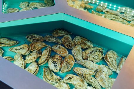 Ocean oysters in the kitchen of the seafood 版權商用圖片