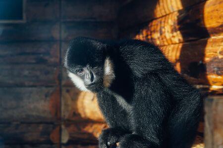 Wild monkey in captivity in zoo cage