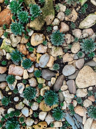 green plants with stones and shells as a background