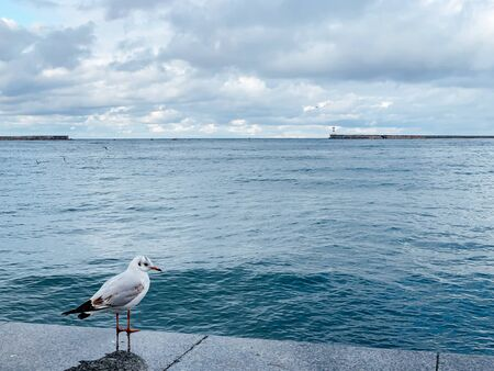 one white seagull on the wharf by the sea