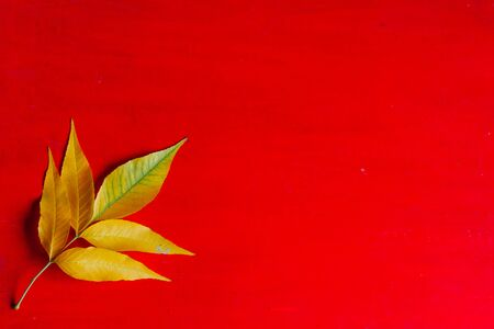 autumn background red yellow fallen leaves place for inscription