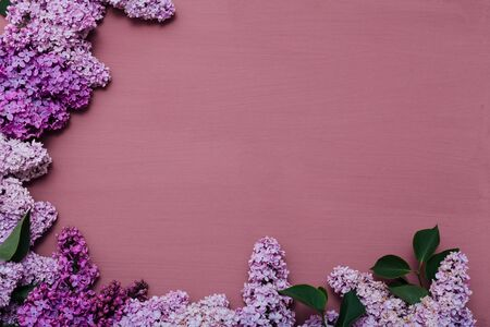 spring blooming lilac flowers on a purple background