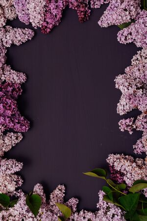 blooming lilac flowers against a dark background