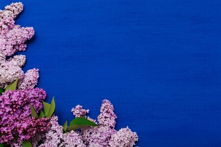 spring blooming lilac flowers on a blue background