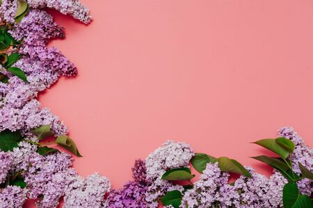 spring blooming lilac flowers on a pink background