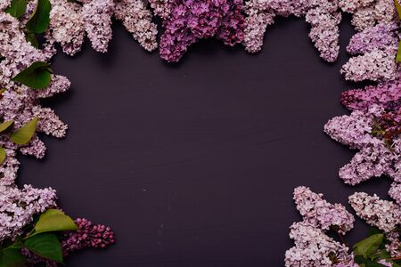 spring blooming lilac flowers against a dark background