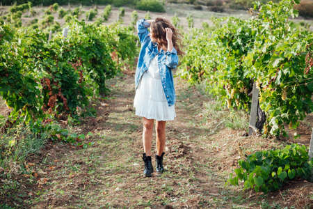 Beautiful woman collects grapes in a vineyard