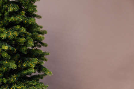 Branches of the Christmas tree pine place for the inscription of the new year gray background 免版税图像
