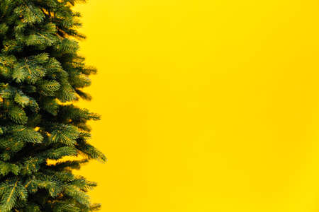 branches of the Christmas tree pine place for the inscription new year yellow background