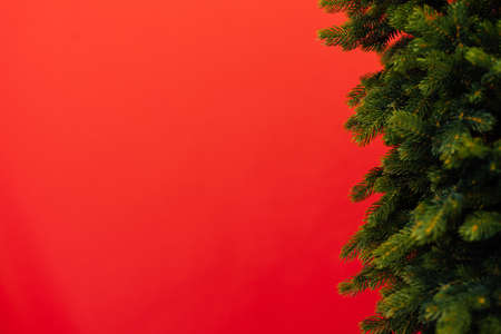 branches of the Christmas tree pine place for the inscription new year red background postcard