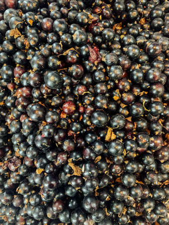 lots of ripe fruit sweet blackcurrants for cooking as a background