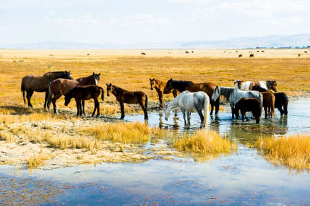 A herd of horses near the water in autumn, against the background of a yellow meadow, Rural Landscape