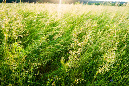 Sunny summer day in the meadow with green grass Stock fotó - 150294128