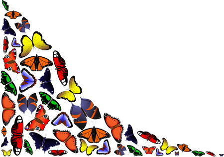 frame for photagraph of butterflies Ilustracja