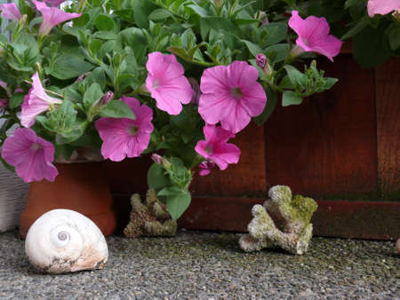 corall: Shells and coralls under petunias