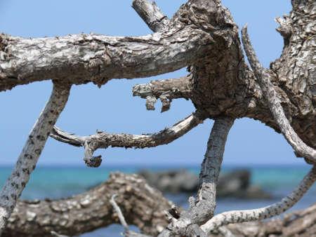drywood: Drywood on a , Big Island, Hawaii