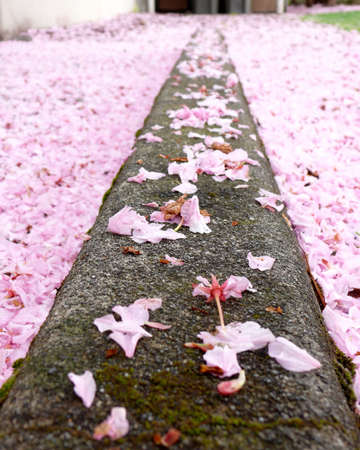borderline: Concrete borderline  in flowers Stock Photo