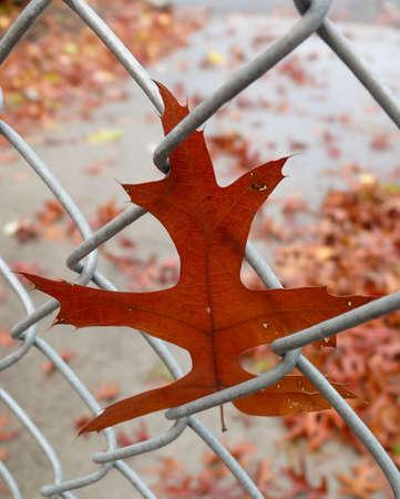 mesh: Leaf in mesh
