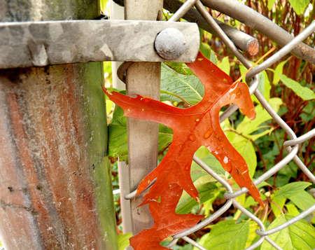 mesh: Leaf in mesh fence