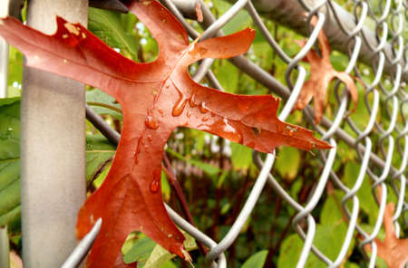 mesh: Fall leaves in mesh