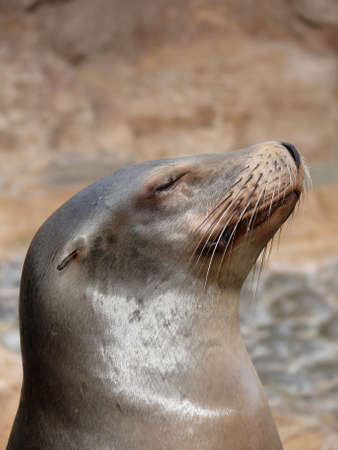 whiskers: Sea lions whiskers