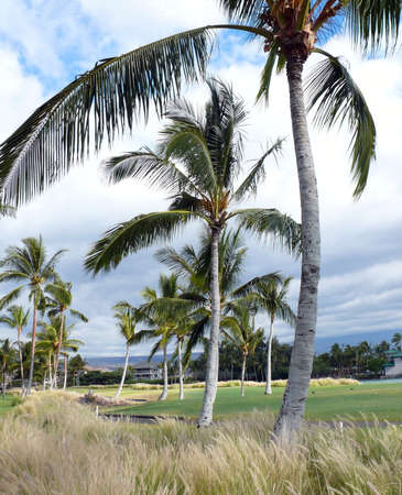 Golf field and a resort near King plaza, Big Island photo
