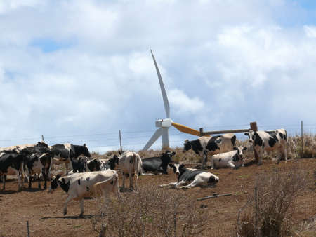 A wind turbine and cows photo