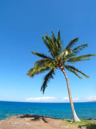 bazalt: Alone palm tree near Kaunaoa Beach, Hawaii