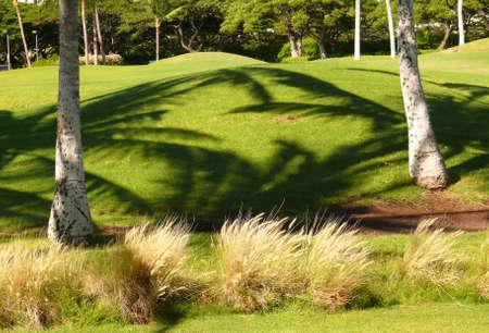 Palm shadows on a golf field  photo
