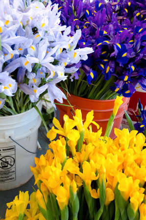 pike place: Variety of irises in buckets  at Pike Place market