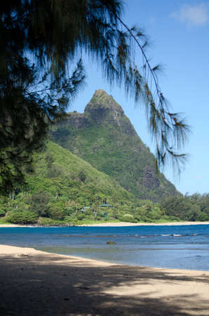 ironwood: Haena beach mountains framed by ironwood branches, North shore, Kauai