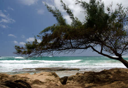 ironwood: Ironwood frames waves at Moloaa Beach , North Shore, Kauai Stock Photo