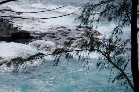 ironwood: Ironwood branches and blue waters of Lumahai beach, North shore, Kauai