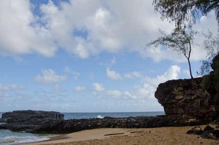 settles: Tree settles on rocks near Lumahai, North shore, Kauai