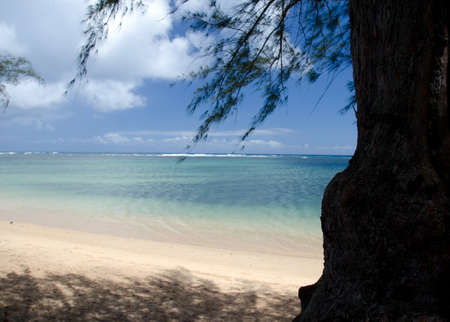 ironwood: Ironwood tree over colorful shallow waters of Anini beach, North shore Kauai Stock Photo