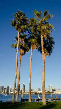 View at San Diego skyline from Coronado Bay through a palm grove photo
