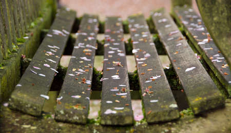 end of the trail: Close-up  of a bench in a campus park covered by cherry petals Stock Photo
