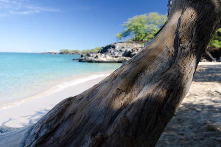 ironwood: Ironwood trunk at Puako beach, Big Island