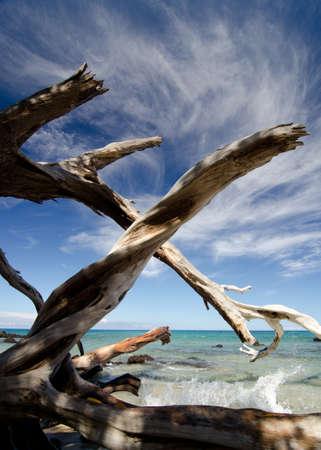 drywood: Spectacular sky over   dry trees and surf at Puako beach, Big Island, Hawaii