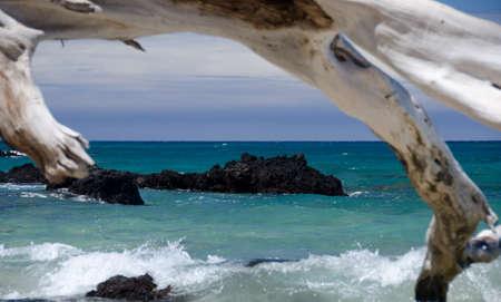 drywood: Dry trees frame a reef at Puako beach, Big Island, Hawaii