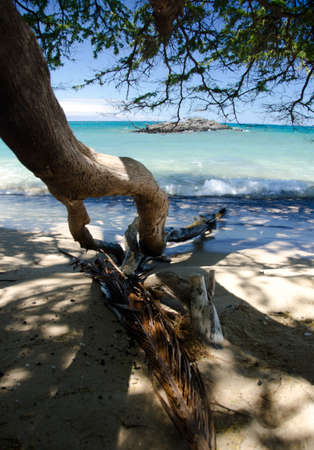 drywood: Dry ironwood  trunk and palm branch  meet the surf of Puako beach, Hawaii Stock Photo