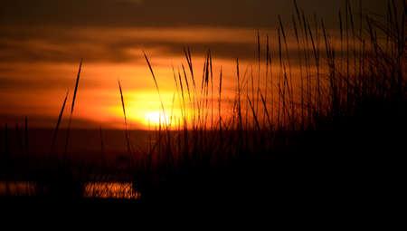 shores: Tall grass on dunes near Ocean Shores during a glorious sunset