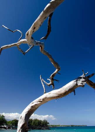 drywood: Network of dry wood trunks at Beach 69, Waialea, Big Island Stock Photo