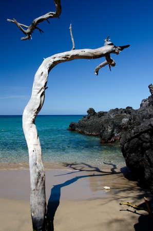 drywood: Group of dry wood trunks at Beach 69, Waialea, Big Island Stock Photo