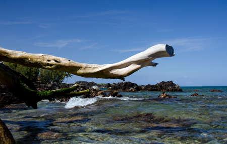 drywood: Bright white dry wood trunk frames surf at Beach 69, Waialea, Big Island