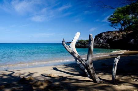 drywood: Drywood, shadows and surf of Beach 69,  Waialea, Big Island