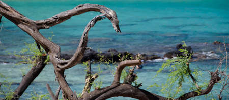 drywood: Dark dry wood pieces in front of gorgeous turquoise water of Beach 69, Waialea, Big Island Stock Photo