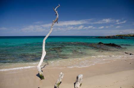big island: Dry wood branches at Beach 69, Waialea, Big Island