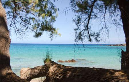 breakaway: Ironwood frame for Beach 69, Waialea, Big Island Stock Photo