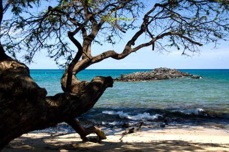 drywood: Surf, shadows and rocks of Beach 69, Waialea, Big Island
